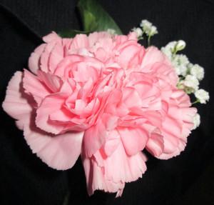 buttonhole 2_bg